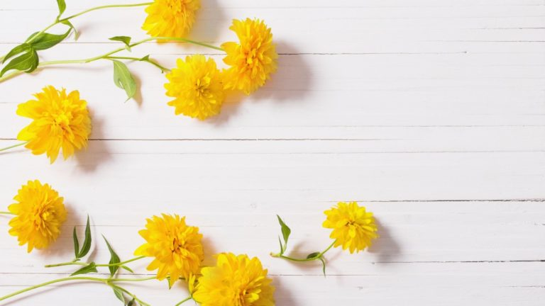 typss of yellow flowers