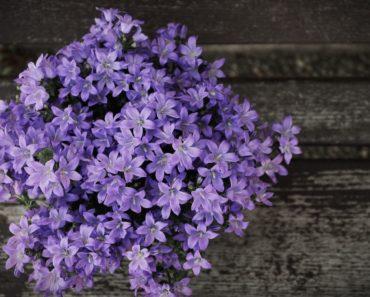 20 Beautiful Purple Flowers