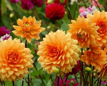 12 Beautiful Mexican Flowers