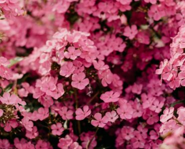 10 Beautiful Types of Pink Flowers
