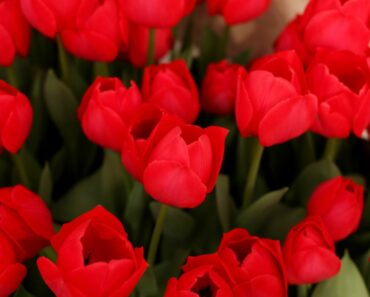 10 Beautiful Types of Red Flowers