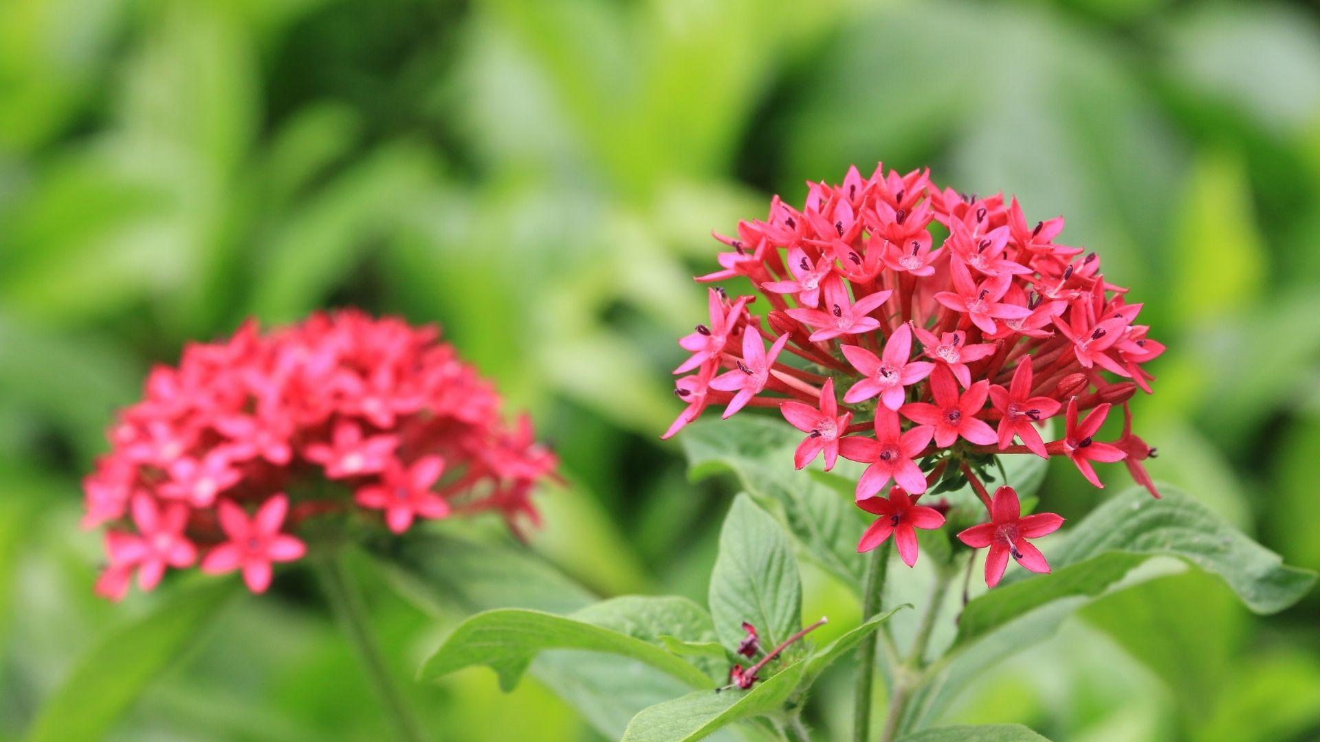 Star cluster flowers
