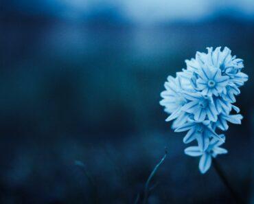 10 Beautiful Blue Flowers